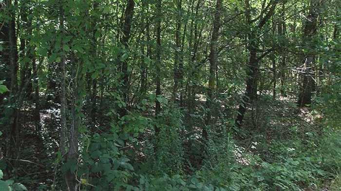 Лес в Алабаме.