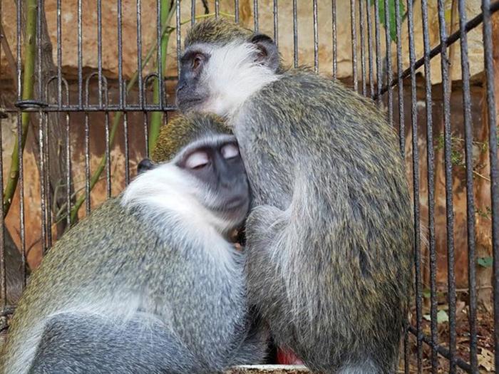 *Они такая прекрасная пара. Они всегда обнимаются и целуют друг дружку.*