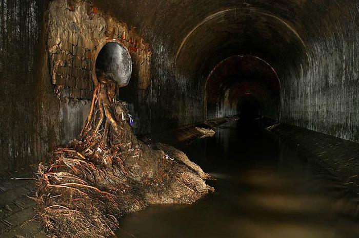 Просочившиеся в тоннель корни деревьев вместе с землей.