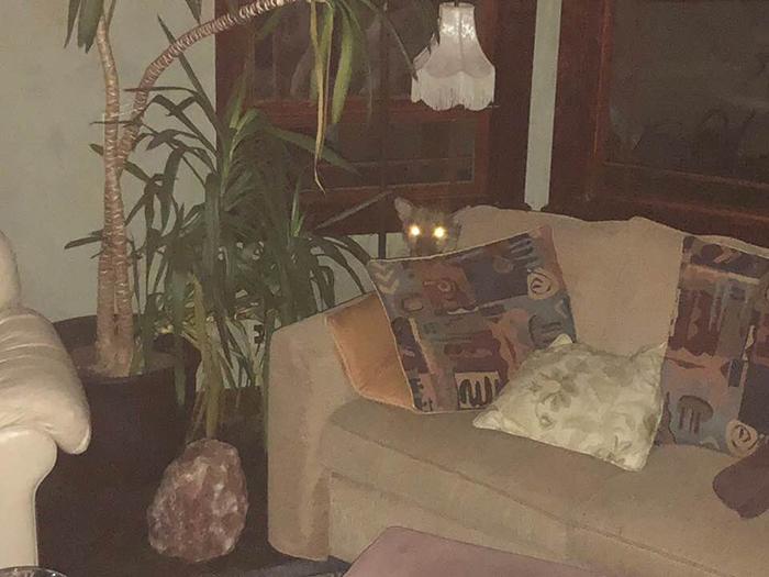 Испуганная пума спряталась за диваном.