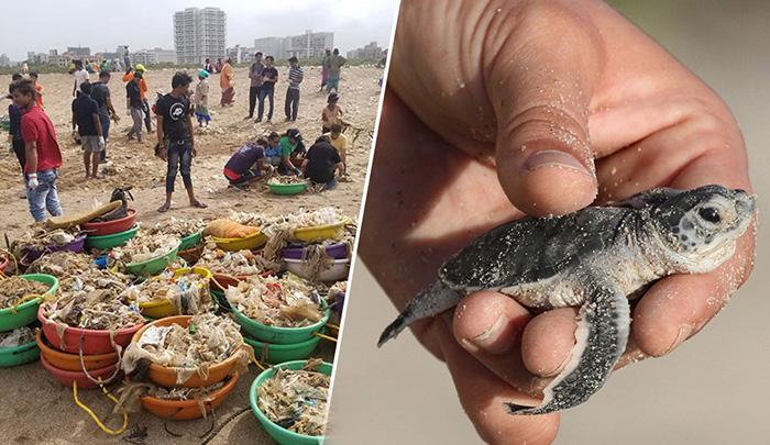 Волонтеры очистили пляж в Мумбаи.
