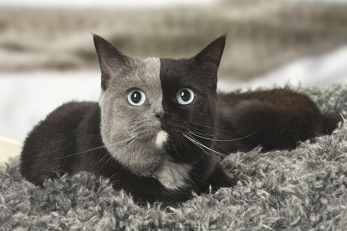 Кошка из Франции.