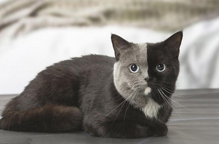Кошка с удивительной расцветкой.