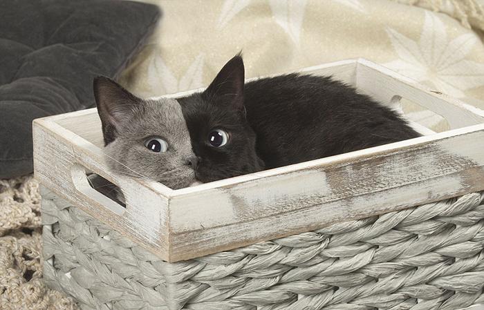 У Нарнии не только уникальная расцветка, но и голубые глаза.