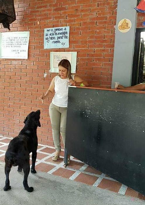 Персонал магазина разрешает собаке *покупать* за листья печенье.