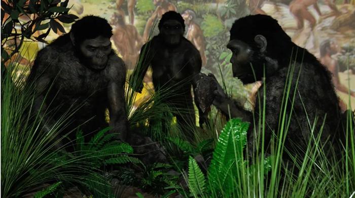 Ученые считают, что у современного человека и крупных приматов был общий предок.