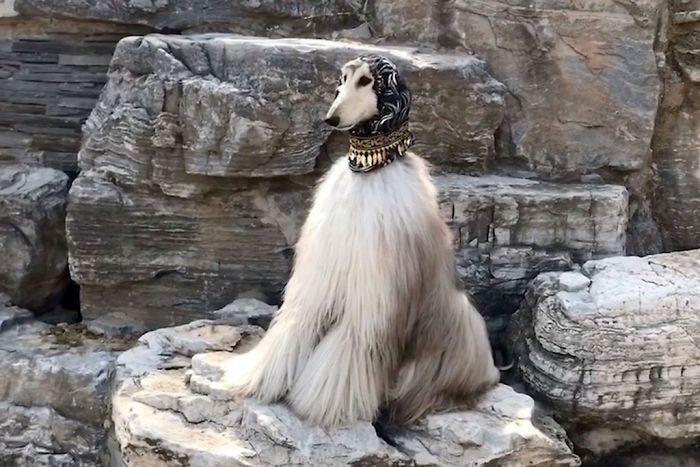 Хозяин ЭйДжей уверен, что так красиво выглядеть без крупных капиталовложений ни одна собака не сможет.