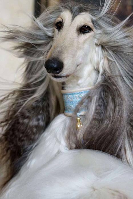 Кевин уверен, что другой такой красивой собаки в мире больше нет.