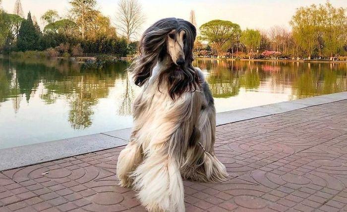 Удивительная собака.