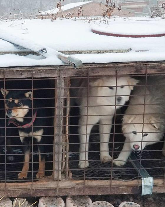 Маленькие клетки, в которых содержались собаки.  Instagram guskenworthy.