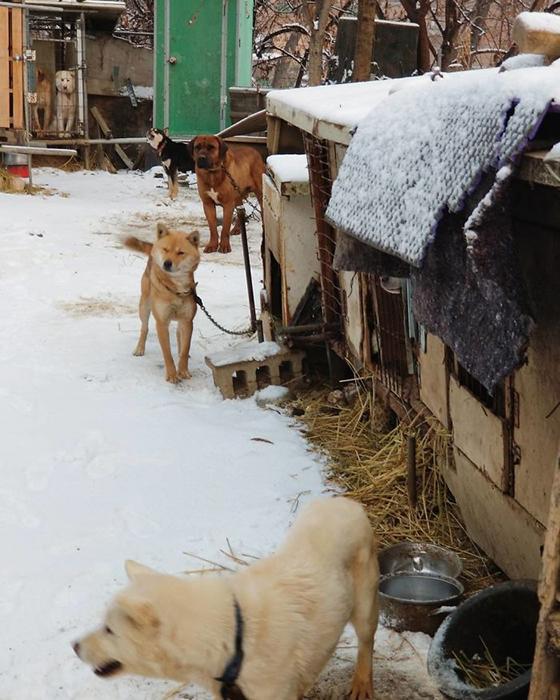 Все собаки жили на морозе.  Instagram guskenworthy.