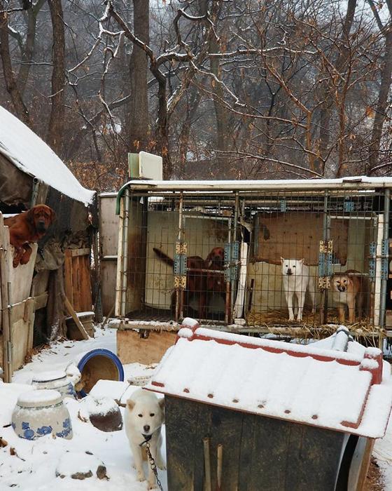 Собачья ферма в Южной Корее.  Instagram guskenworthy.