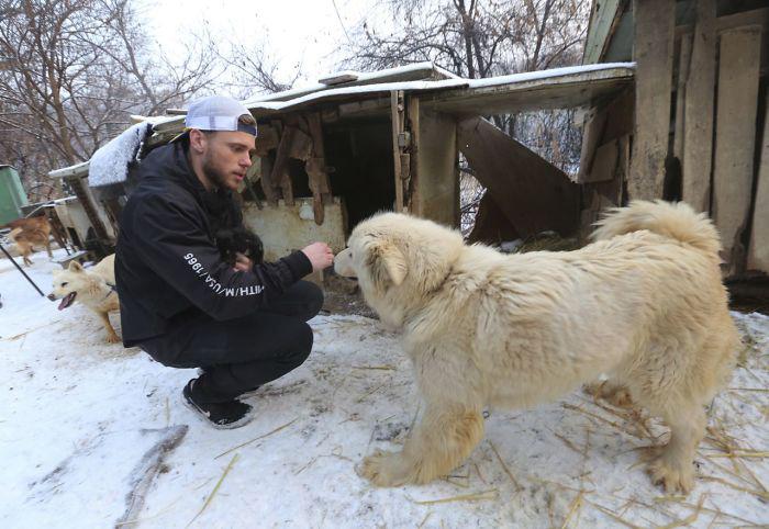 Собаки на собачьих фермах - такие же, каких в остальном мире держат дома.  Instagram guskenworthy.