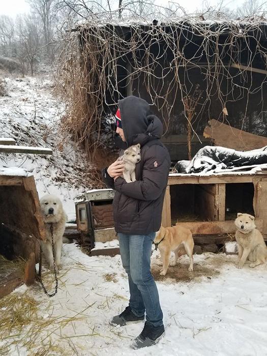 Всех собак с этой фермы транспортируют в США и Канаду.  Instagram guskenworthy.