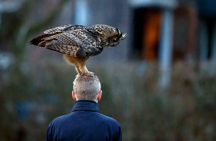 Необычная сова из Голландии.