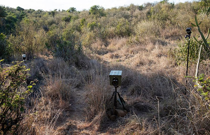 Камеры, с помощью которых фотограф снимает ночную жизнь в саванне.