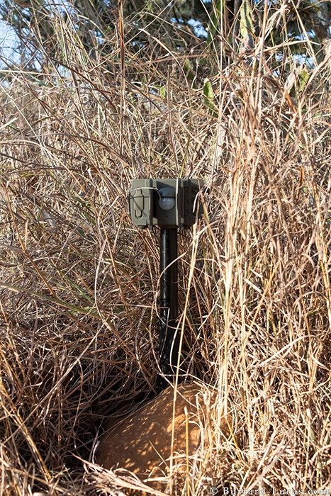Камера, позволившая Уиллу сделать фотографии черной пантеры.
