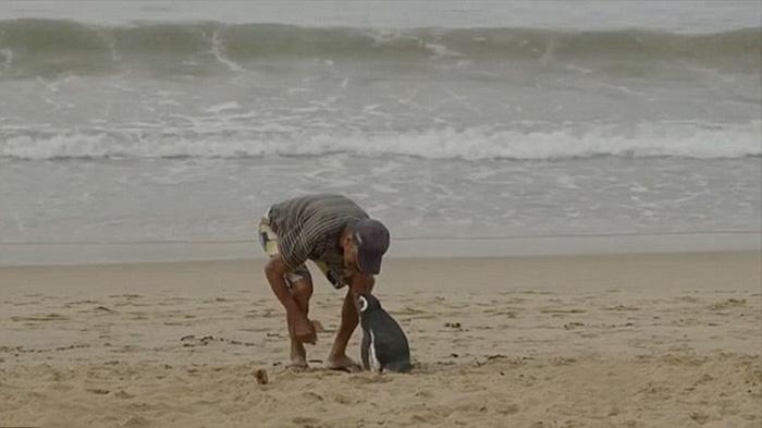 Каждый год пингвин преодолевает 8 000 км, чтобы пробыть 8 месяцев с Жоао.