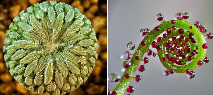 Идеальные формы растительного мира.