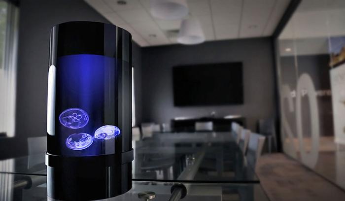Стильный аквариум с медузами может украсить любую обстановку.