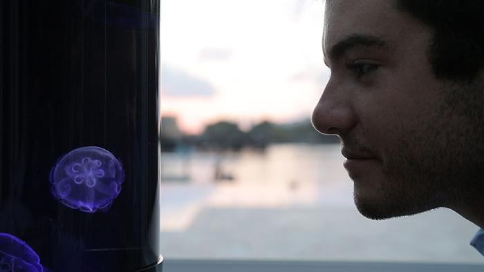 Медузы вполне самостоятельны и неприхотливы.