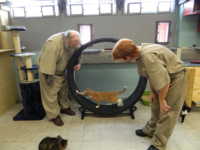 Заключенные сами заботятся за питомцами, убирают за ними, ухаживают.