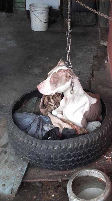 Кала несколько лет сидела на привязи, не в силах положить голову на лапы.