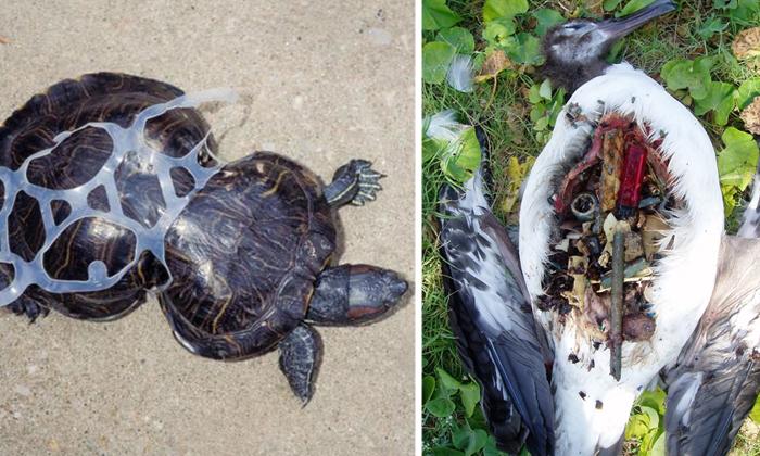 Последствия загрязнения мирового океана пластиком.