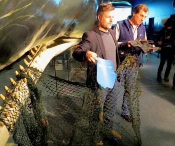 Внутри одного из кашалотов нашли 13-метровую рыболовную сеть.