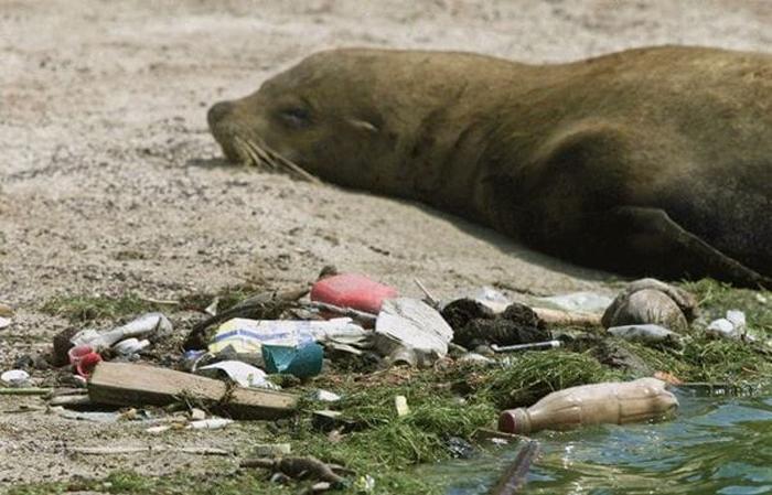 Пластик является самым частовстречающимся мусором в океане.