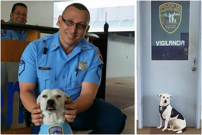 Бездомный пес стал талисманом для полицейских.