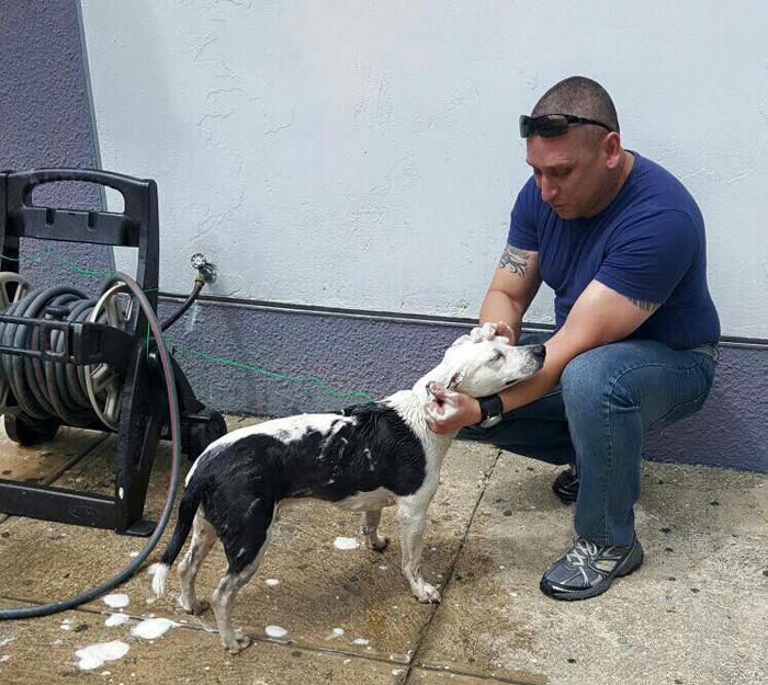 Всего за несколько месяцев Горги превратился из худого испуганного пса в жизнерадостного упитанного питомца.