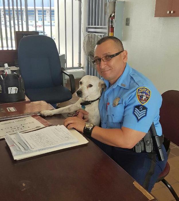 Недавно Горги отправили на специальные курсы для служебных собак.