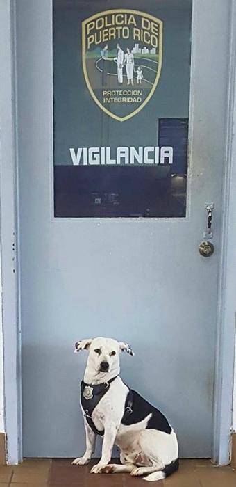 Некогда бездомный пес на новой службе.