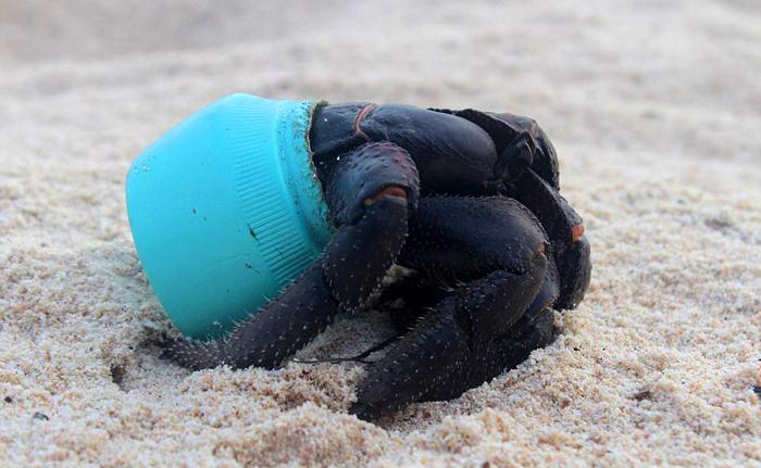 Самый загрязненный остров в мире - остров Хендерсон.