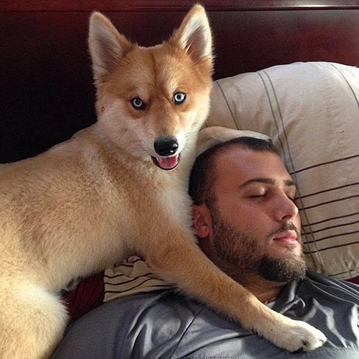 Миа со своим хозяином Дейвом Лашио.  Instagram myathepomsky.