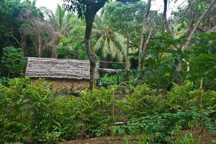 Жилище местных жителей на острове Танна, Вануату.