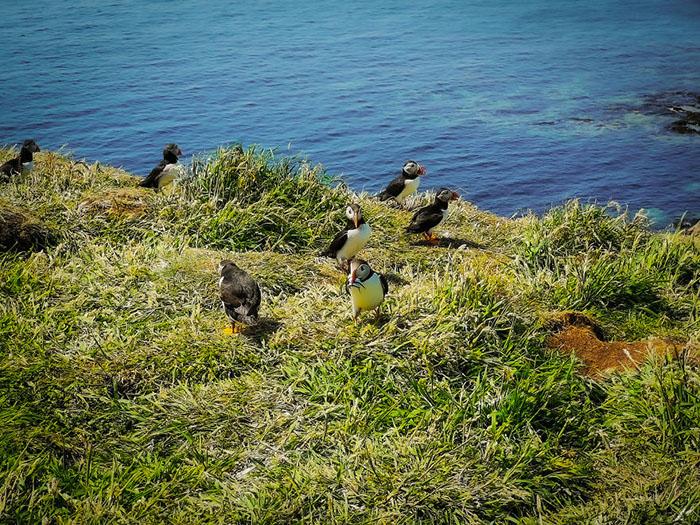 Морские птицы.