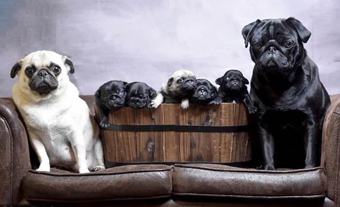 Фотосессия Налы, Симбы и их щенят.