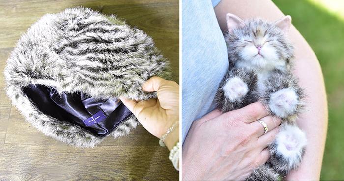 Котенок из шапки.
