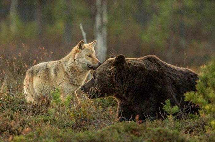 Необычные друзья. Автор фото: Lassi Rautiainen.