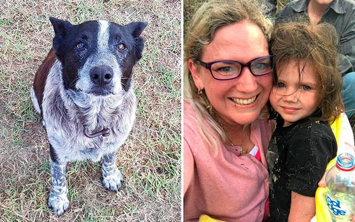 Старый пес спас маленькую девочку.