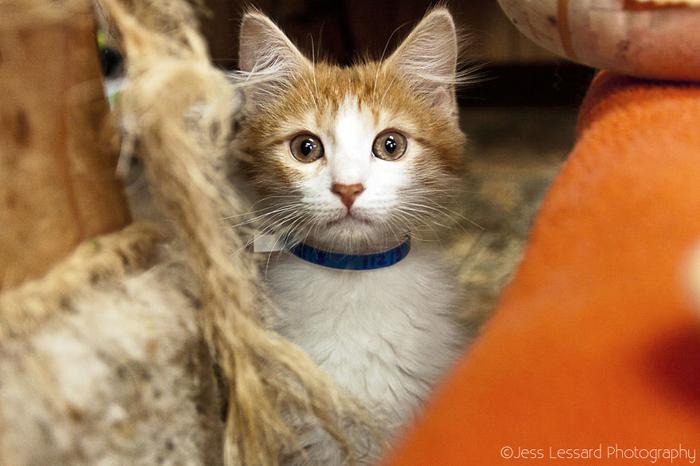 Каждый котенок ждет своих новых хозяев.
