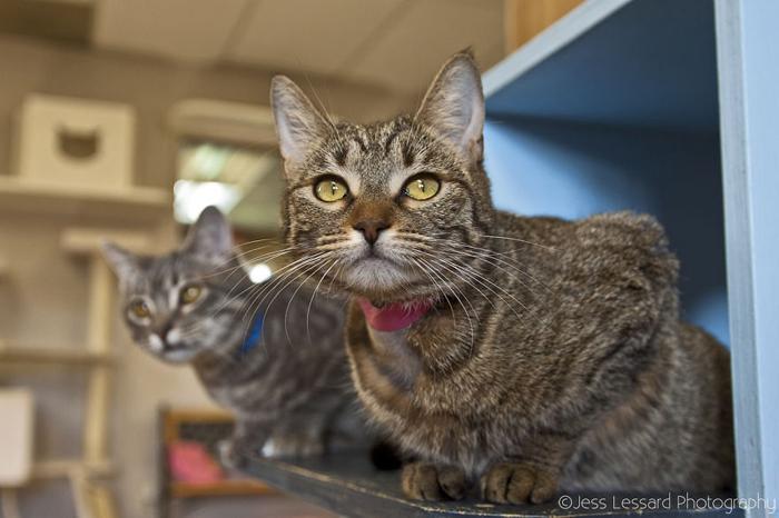 Взрослых кошек стерилизуют.