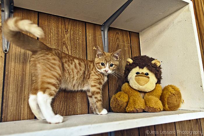 У кошек много пространства, где они могут свободно гулять.