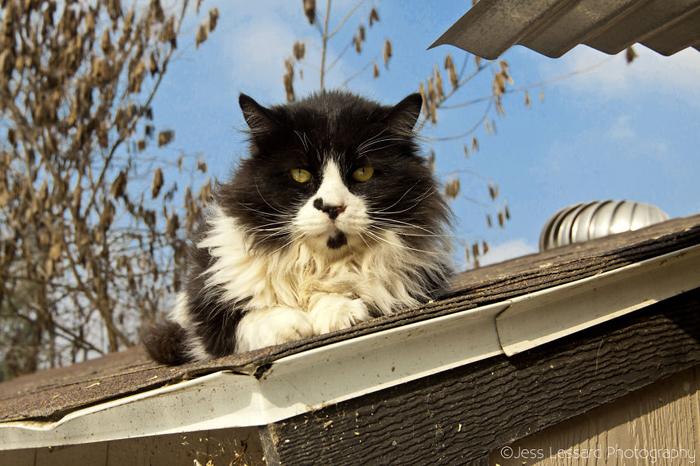 Шикарные коты в приюте.