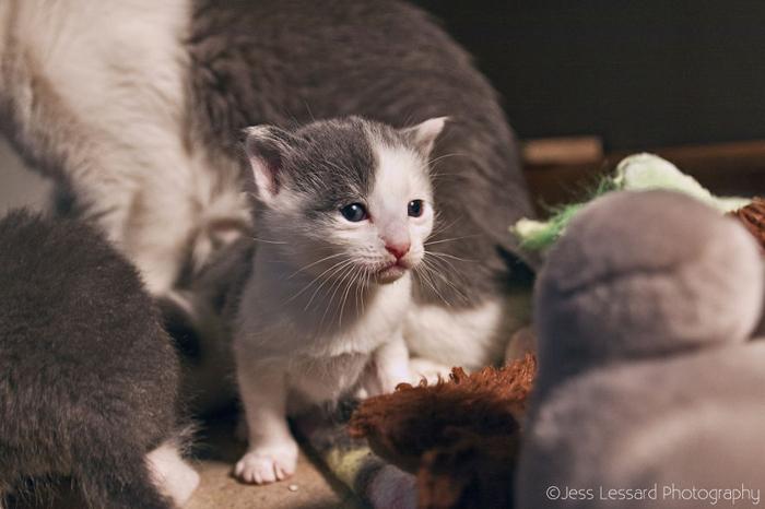 Многие котята попадают в приют совсем маленькими.