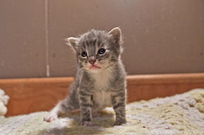 Многих котят, если бы не приют, ждала бы неминуемая смерть.