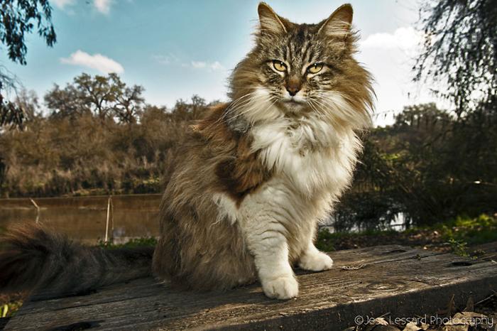 Кошкам отдано 12 акров территории.