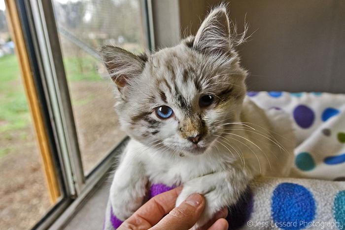 Эта милая кошечка была при смерти, когда ее доставили в приют.